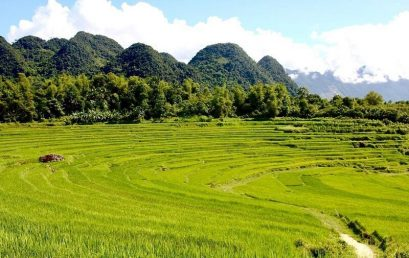 Pu-Luong-rice-fields