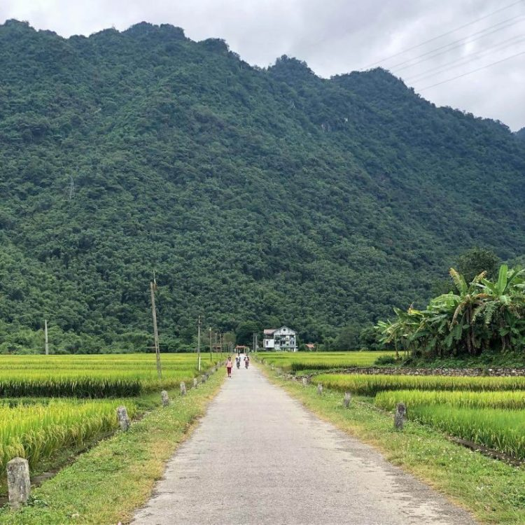rice-field-in-mai-chau